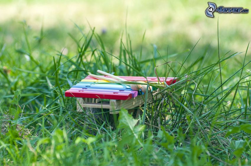 xilófono, hierba