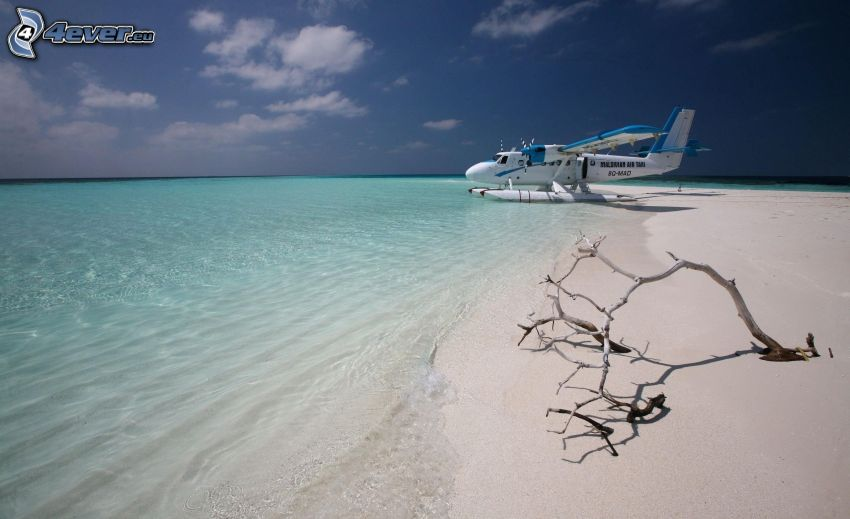 avión, mar, playa, rama