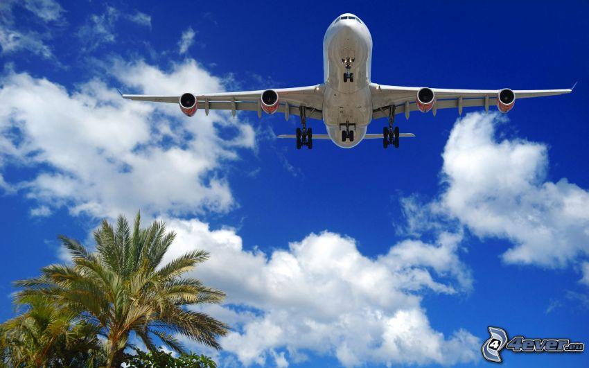 Boeing 747, avión, nubes, palmera