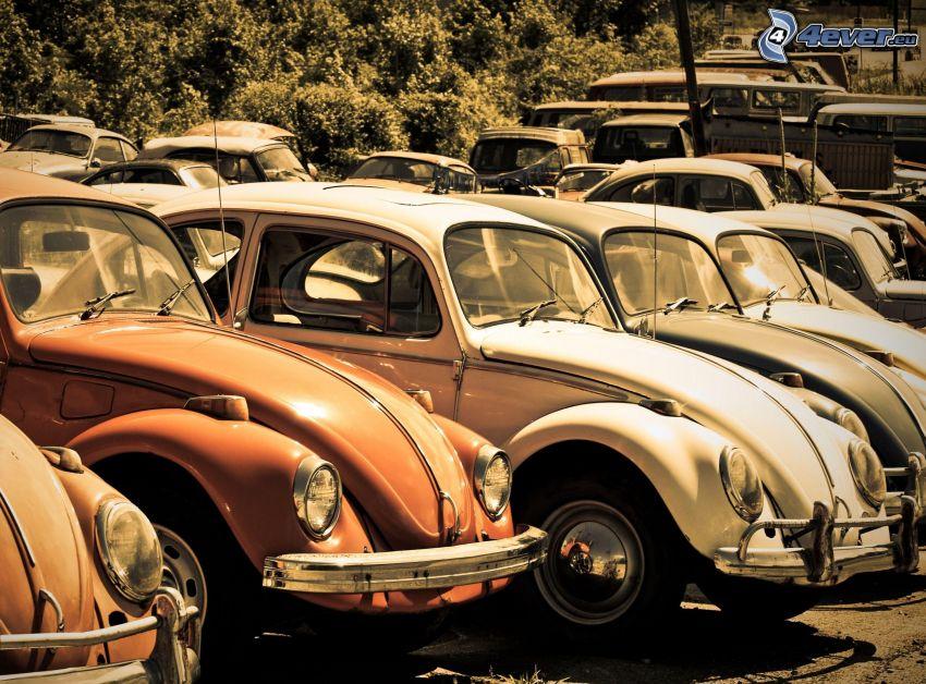 aparcamiento de coches antiguos, Volkswagen Beetle