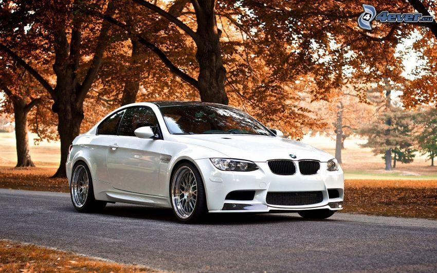 BMW M3, camino, árboles otoñales