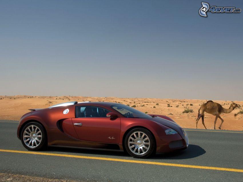 Bugatti Veyron, camello, desierto