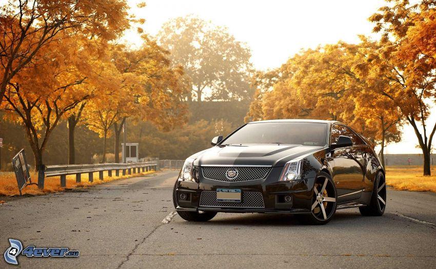 Cadillac Cien, árboles amarillos