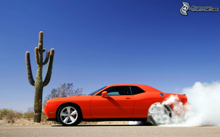 Dodge Challenger SRT, burnout, humo, cactus