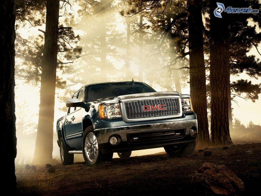 GMC, pickup truck, rayos de sol en el bosque
