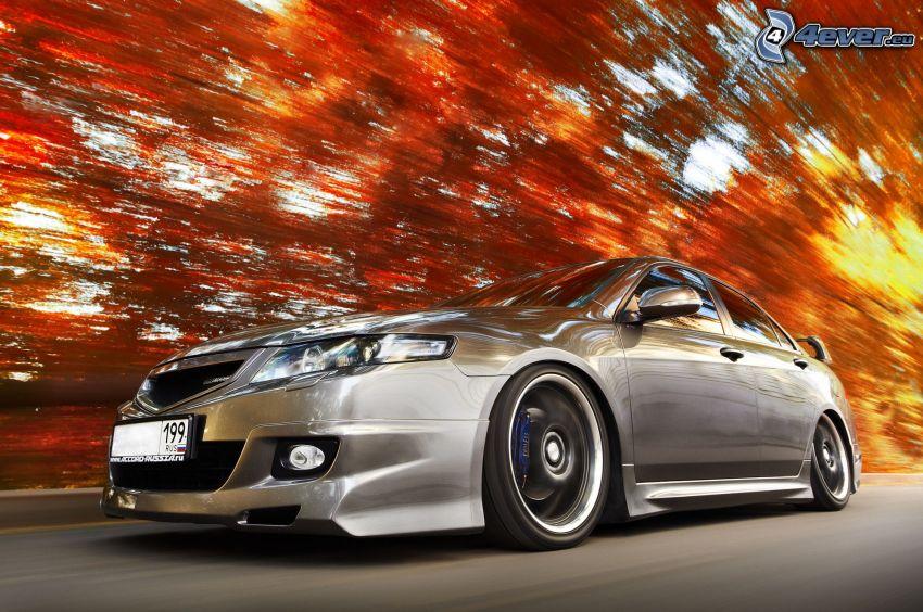 Honda Accord, acelerar, bosque rojo del otoño