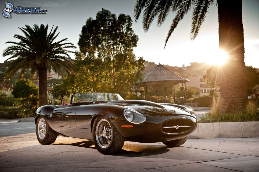 Jaguar E-Type, descapotable, palmera, puesta del sol