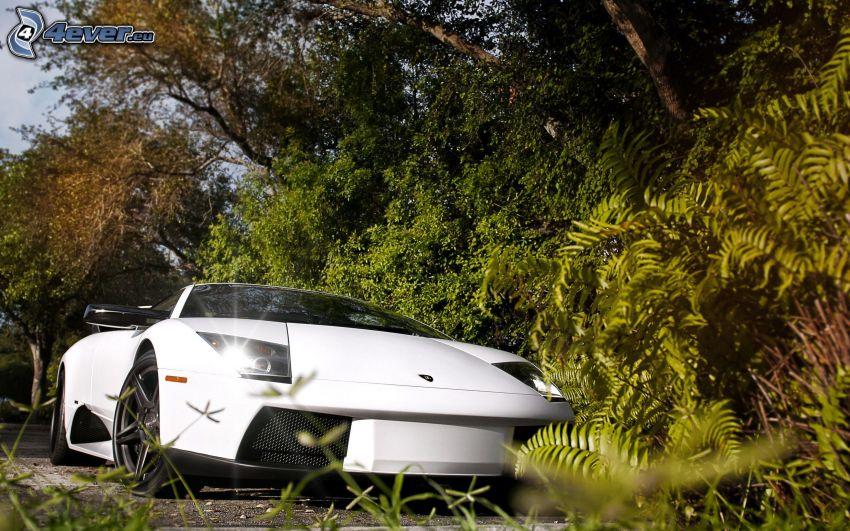 Lamborghini Murciélago, verde