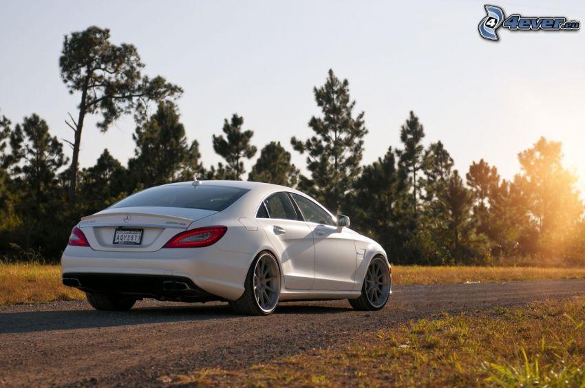 Mercedes-Benz, camino, árboles coníferos