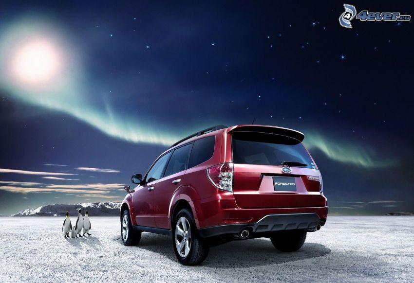 SUV, Subaru Forester, pingüinos, nieve, cielo estrellado