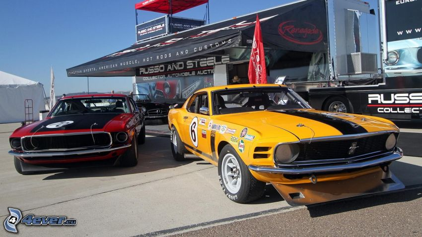 Ford Mustang, veterano, coche de carreras