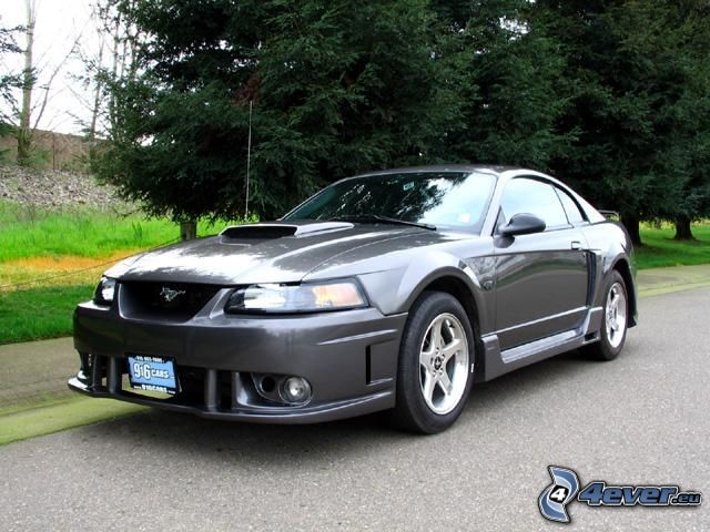 Ford Mustang, coche