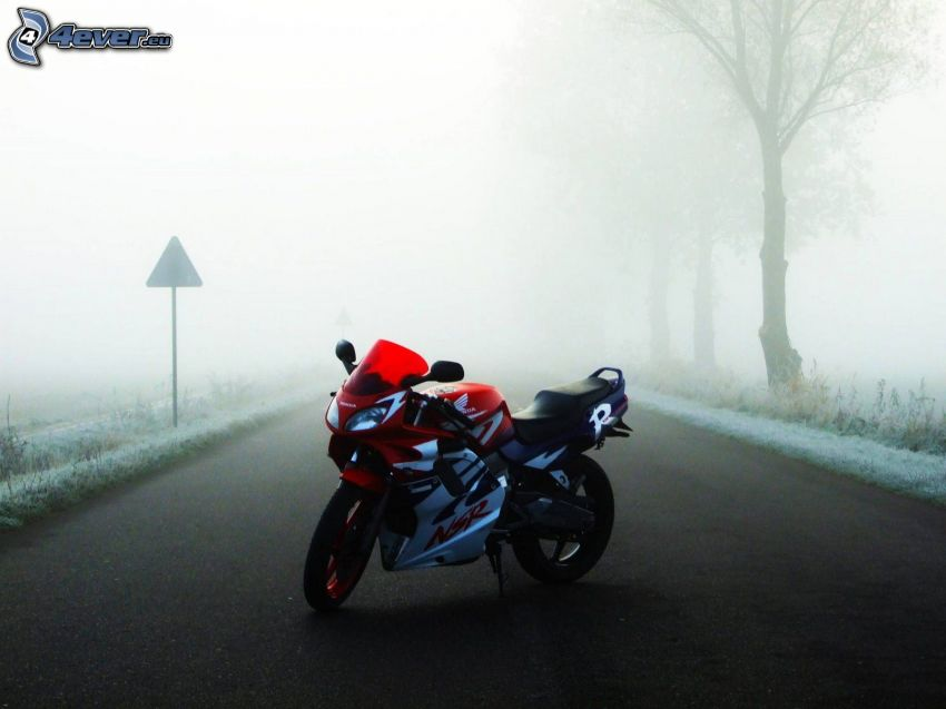 Honda NSR, niebla, camino, arboleda, señal de tráfico