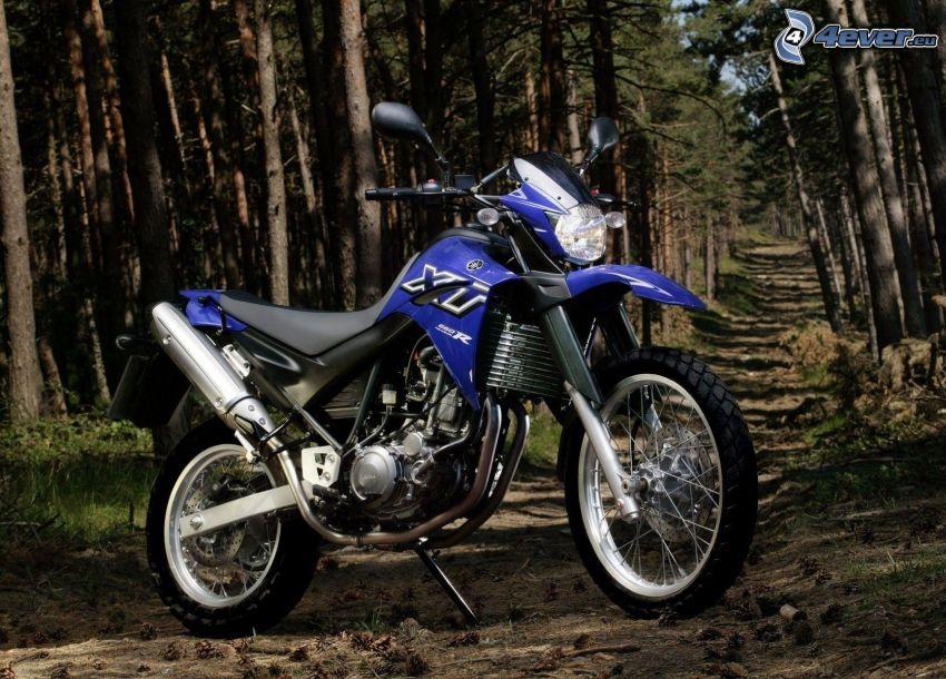 Yamaha, bosque