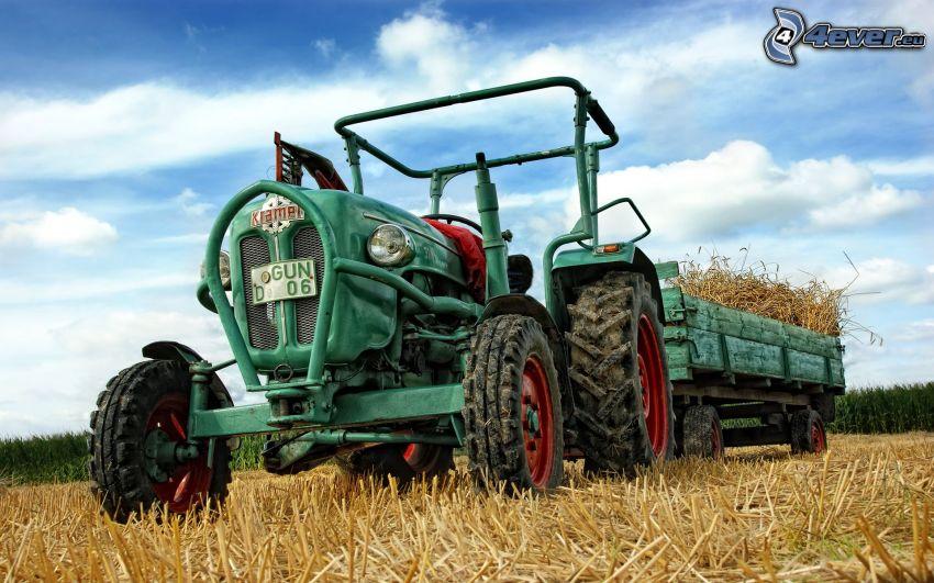 tractor en el campo, grano, cosecha