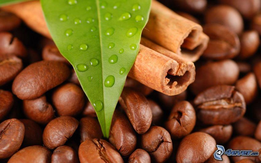 canela, granos de café, hoja, rocío