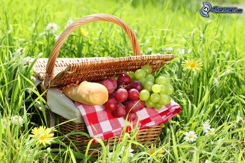picnic, cesta, uvas, baguette, hierba, flores amarillas, flores blancas