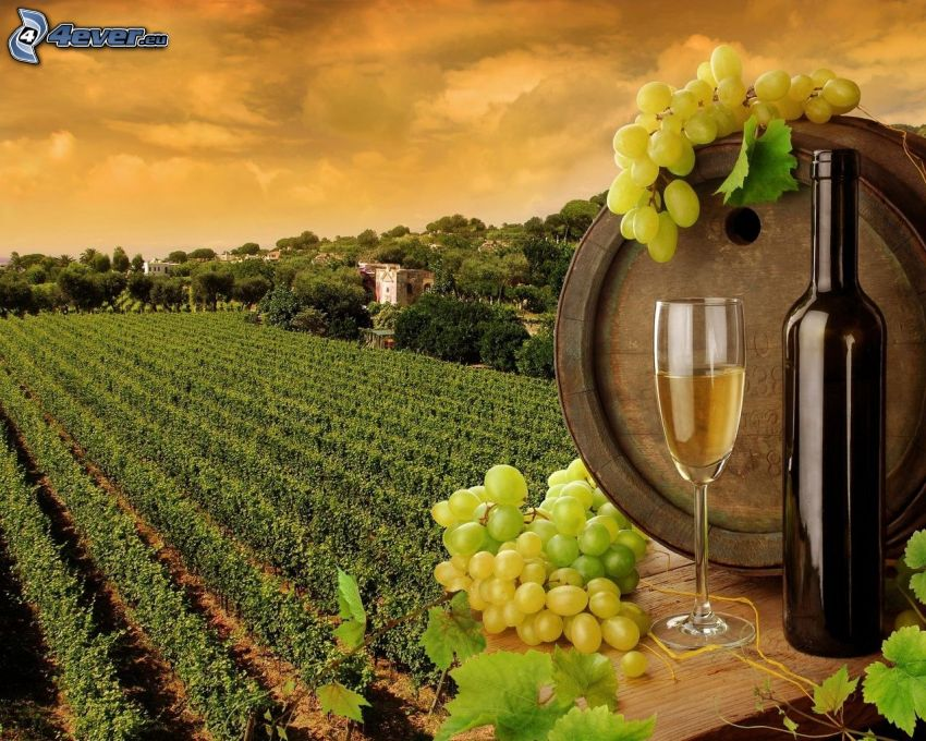 vino, botella, barril, uvas, viña