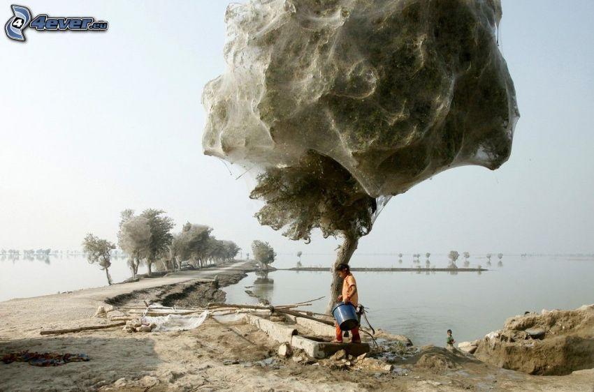 árbol, tela de araña, mar, muelle