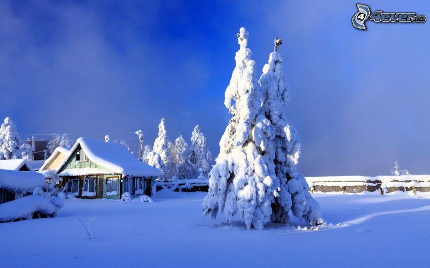 árbol nevado, casa cubierta de nieve