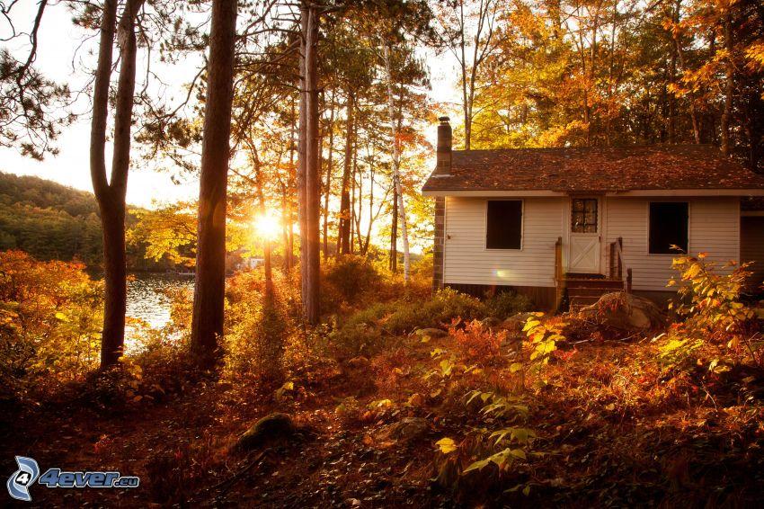 casa, árboles otoñales