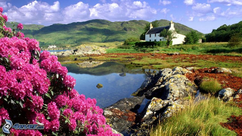 casa, lago, flores de color rosa, sierra