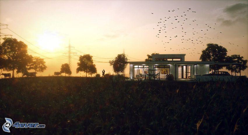 casa moderna, árboles, campo, pareja, bandada de pájaros