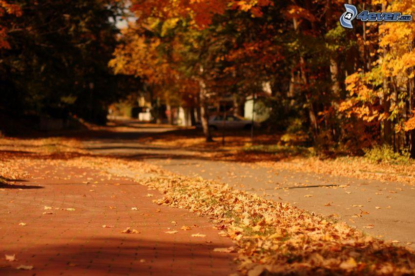 acera, árboles otoñales, hojas de otoño
