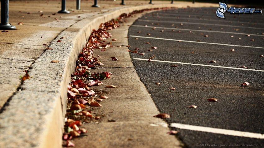 acera, camino, parking, hojas secas