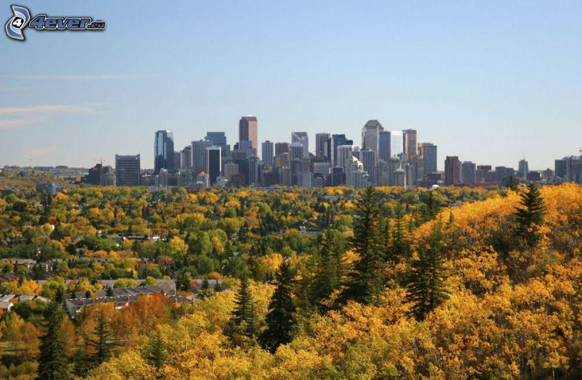 Calgary, rascacielos, árboles otoñales