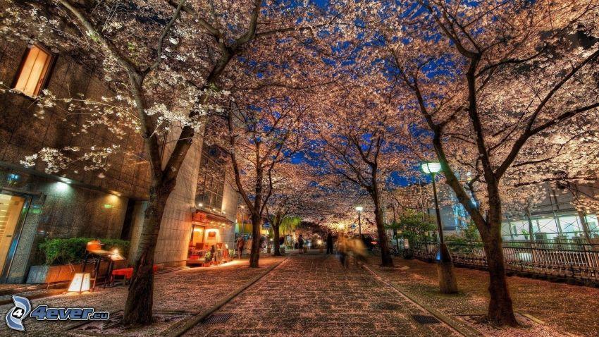 calle, árboles en flor, HDR