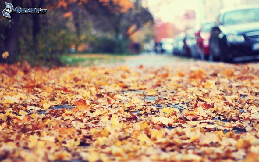 hojas de otoño, camino, coches