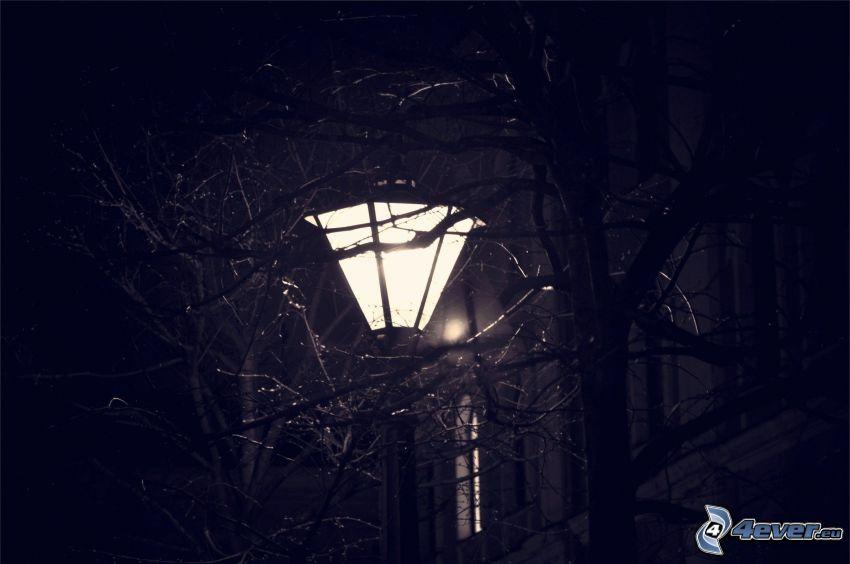 lámpara de calle, ramas, noche