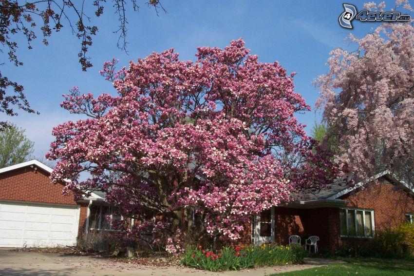 magnolia, casas