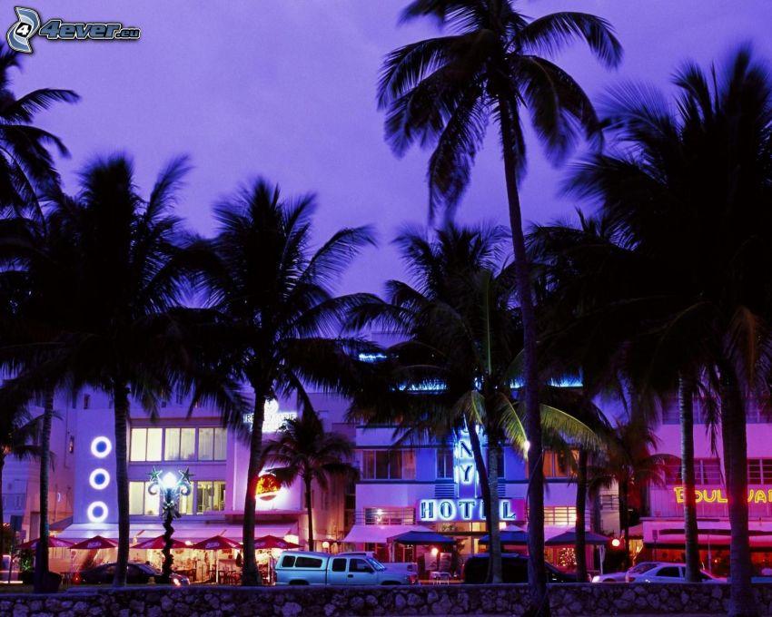 Miami, palmera, cielo púrpura, hotel