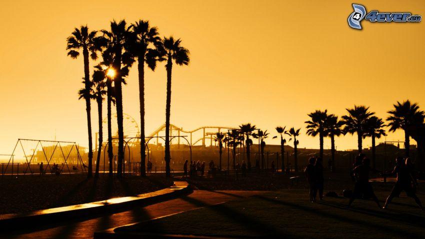 palmera, parque de atracciones, rueda de la fortuna, siluetas de los árboles, Santa Monica