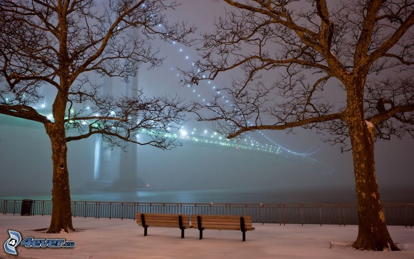 puente iluminado, árboles, bancos, noche