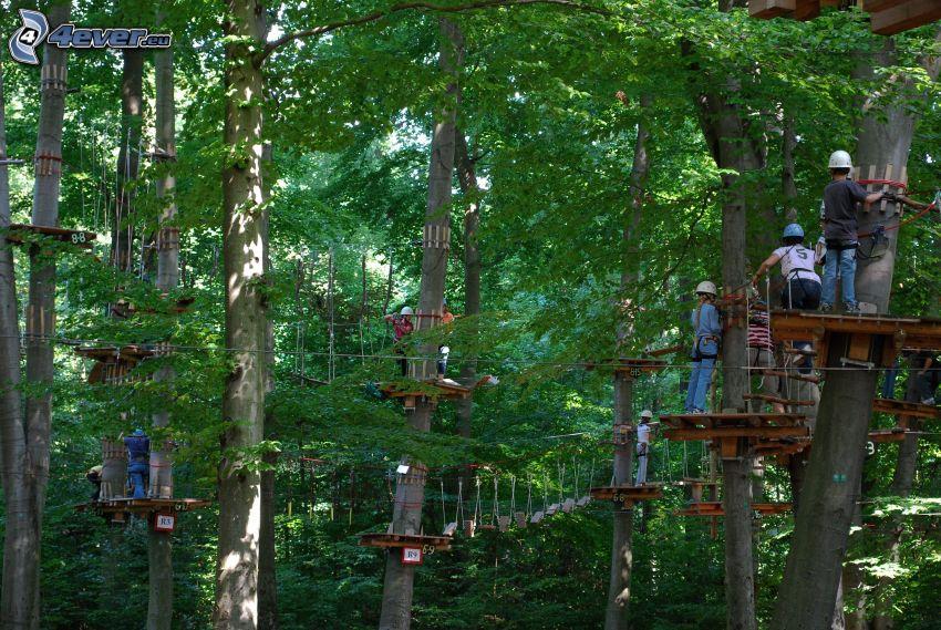curso de cuerdas, bosque, árboles