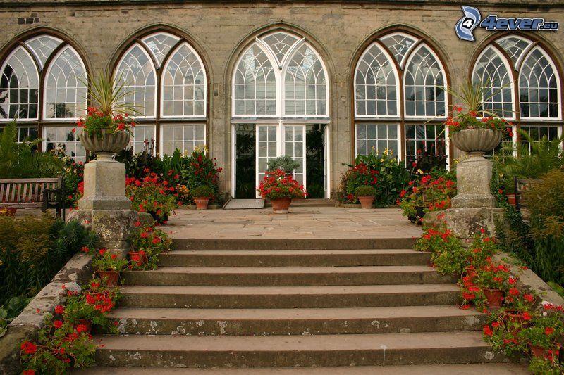 escalera, geranium, flores rojas, ventanas