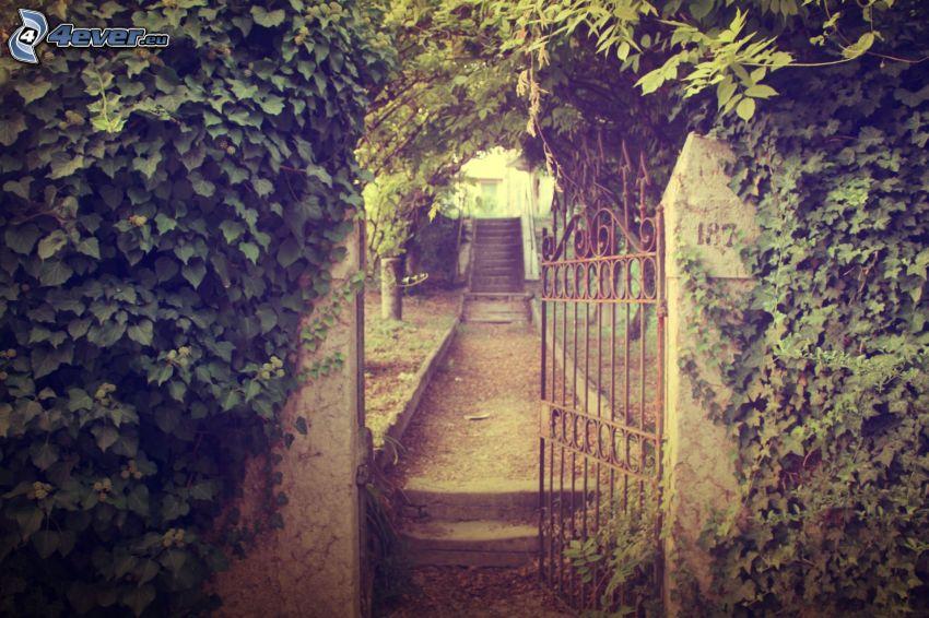 escalera, puerta, plantas