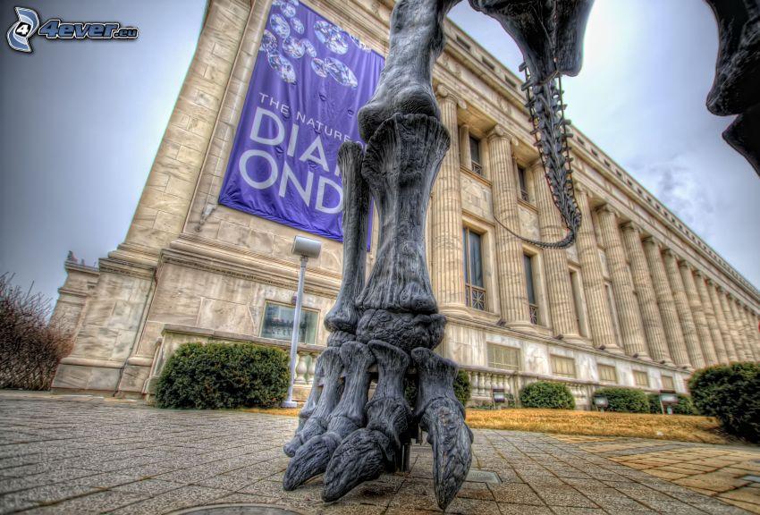esqueleto, pie, museo