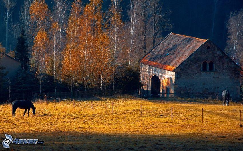 estable, caballos negros, árboles otoñales