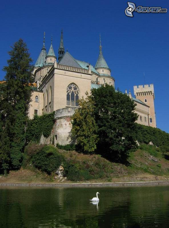 Castillo Bojnice, lago, cisne