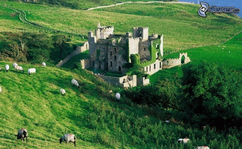 Clifden, Irlanda, castillo, colina, verde, ovejas