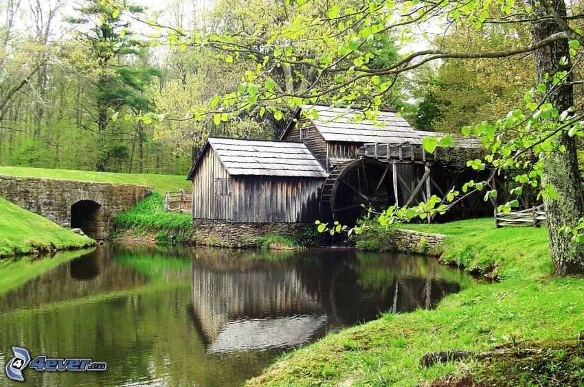 Mabry Mill, río, bosque