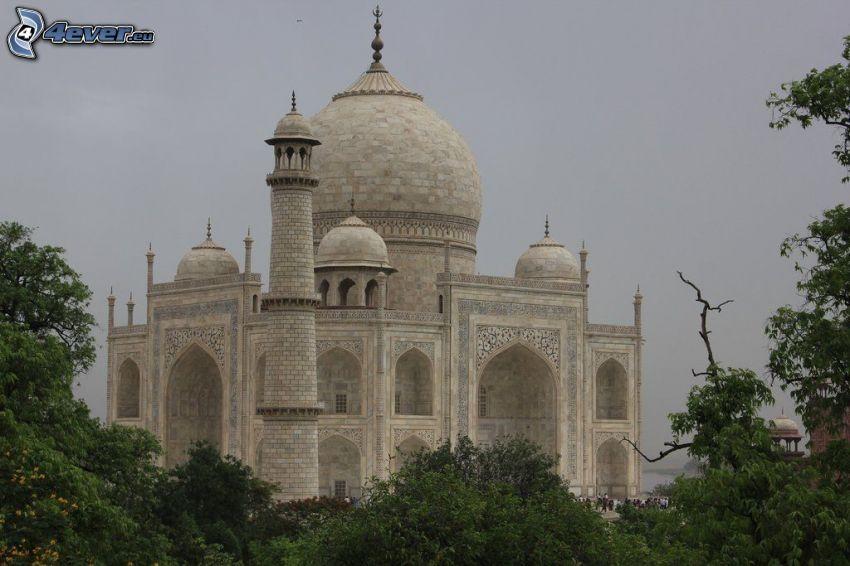 Taj Mahal, árboles