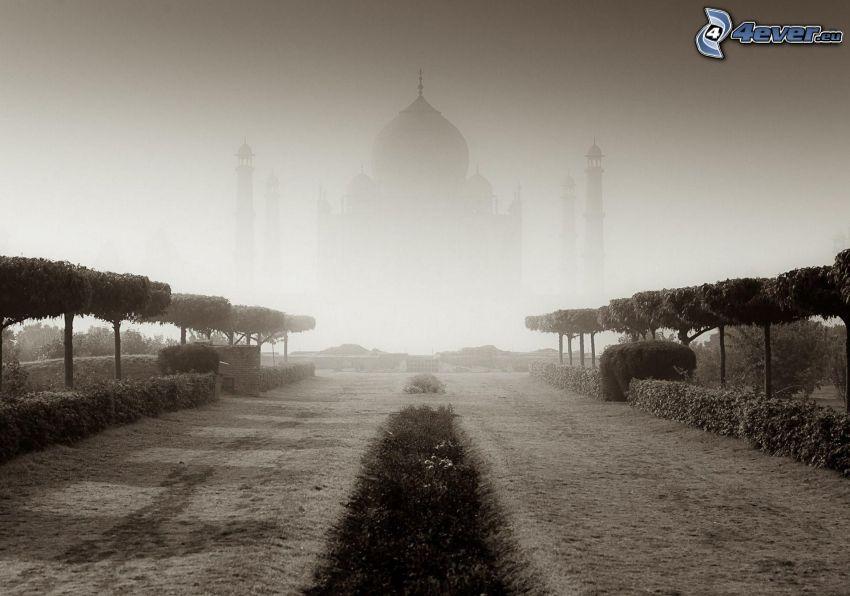Taj Mahal, India, palacio, niebla, líneas de árboles, blanco y negro