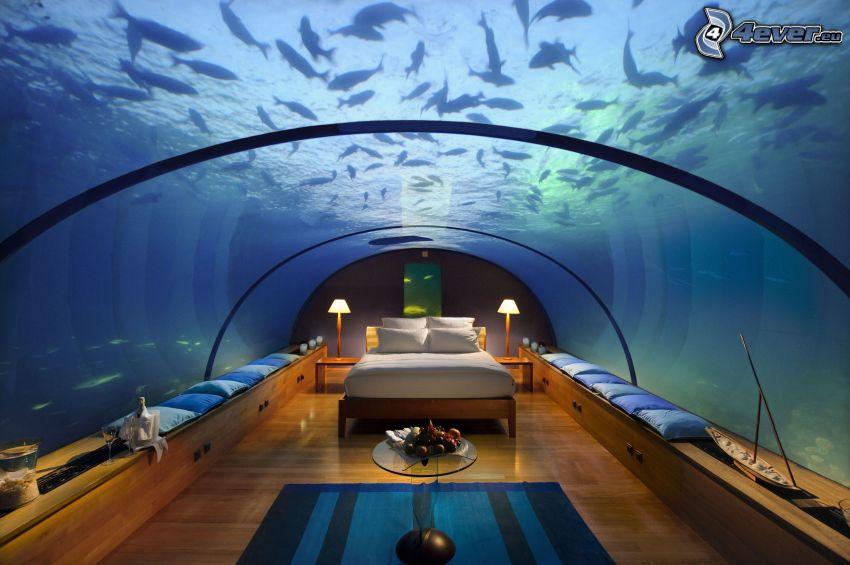 hotel Conrad, habitación bajo el agua, Maldivas, peces