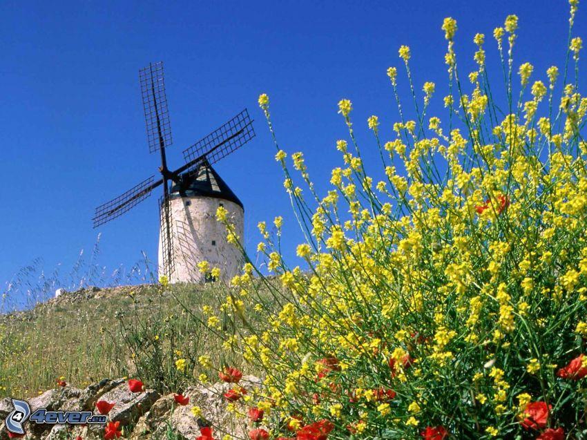 molino de viento, flores amarillas