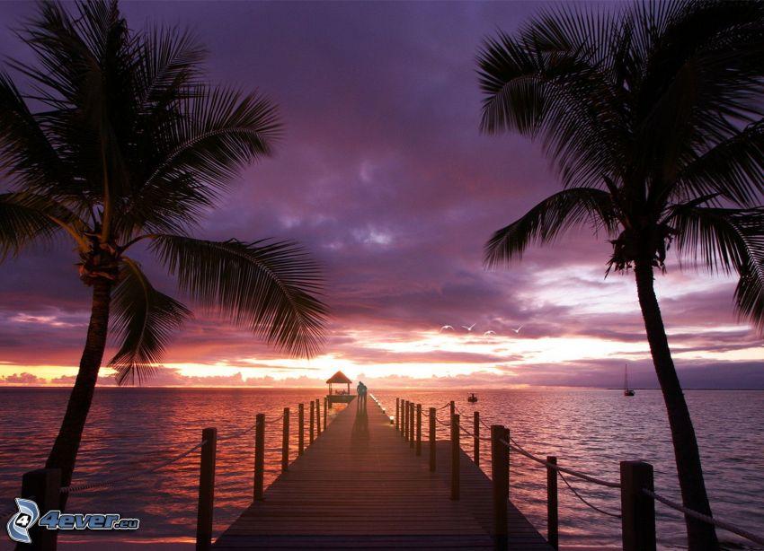 muelle de madera, palmera, mar, cielo de la tarde, cielo púrpura